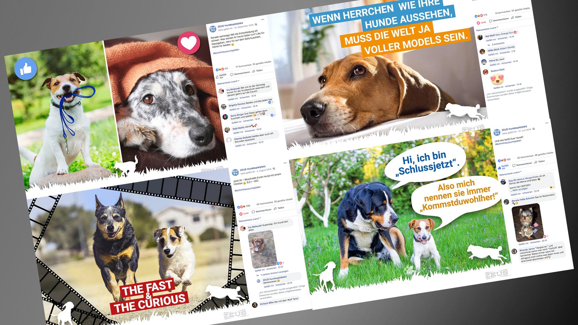 Nach einem Jahr auf Facebook spielen über 2.000 Follower auf dem ZEUS Hundespielplatz.